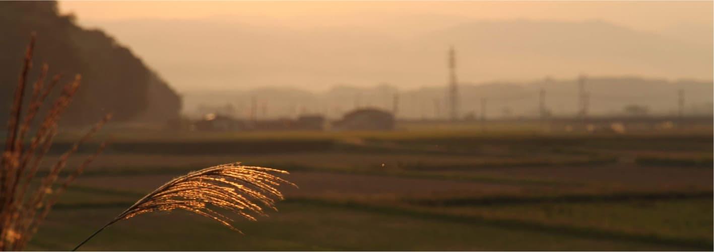 カカシと田園風景
